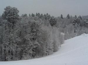 Schøn verschneiter Wald