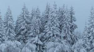 Winterwonderwald