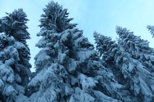 Schneebäume vor dem bisschen blauen Himmel