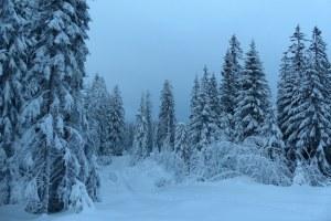 ... noch mehr tief verschneiter Wald...