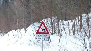 """Warnschild vor """"Großer Elchgefahr"""" Stadtrand von Oslo"""