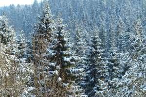 ... und weiße Wälder erschaffen.