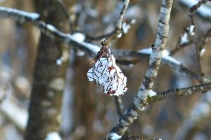 Der Winter hat mit seinem langen Atem ...