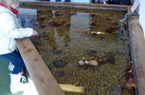 Drøbak Aquarium: Streichelzoo mal anders: Seesterne, Krabben, Krebse, Schwämme, .... zum anfassen!