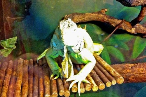 ... Reptilien im gleichen Terrarium??? Na ja, artgerechte Tierhaltung sieht anders aus.