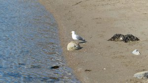 Noch hat die Möwe den Strand alleine