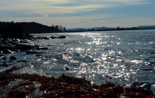 Sonnenglitzer auf dem Fjord