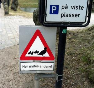 """Frei übersetzt: """"Hier begegnen sie Enten!"""" und Möwen und Krähen und Tauben,...... ;-)"""