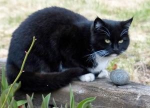 Schöne schwarze Katze