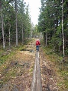 Abenteuerlicher Waldweg über Moor und Sumpf