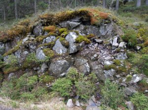 Erste Pflanzen auf erodiertem Fels: Moose und Flechten