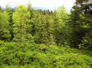 Frisches, sattes Grün im Nowegischen Frühling
