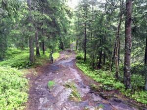 """Waldweg bei meinem """"Mini-Triathlon"""" besserer Teil ..."""