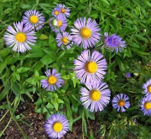 Botanischer Garten in voller Bluete...