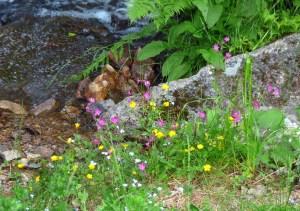 Waldblumen am Holmenkollen