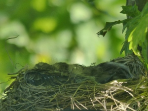 """Lieber mal wieder ins Nest kuscheln!"""