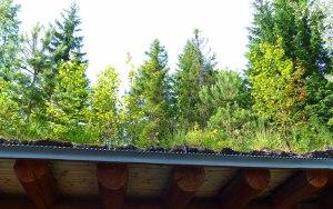 Das bewachsene Dach des Grillplatzes.