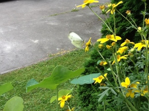 Besucher an meinen Balkonblumen
