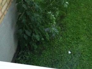 Regenrinnen die in die Kanalistation führen??? - ...