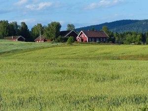 Sommer in der Nordmarka