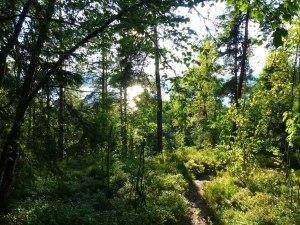 Norwegische Wälder