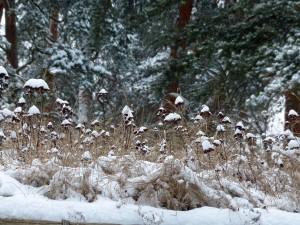Schneeimpressionen auf den Grasbewachsenen ...