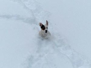 ... aber sie hatten ihren Spaß im Schnee! :-)