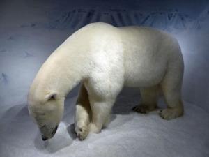 Eisbär und ...