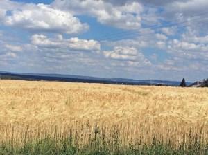 Sommer in Deutschland