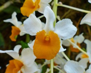 Orchideenbluete im Bot. Garten